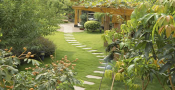 Lush Green Garden With Stone Walkway