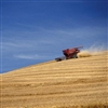 Faux wood blinds can add a natural touch to a modern ranch